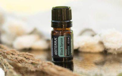 Black Spruce – ätherisches Öl der Schwarzfichte