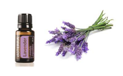 Lavender – Das ätherische Lavendelöl