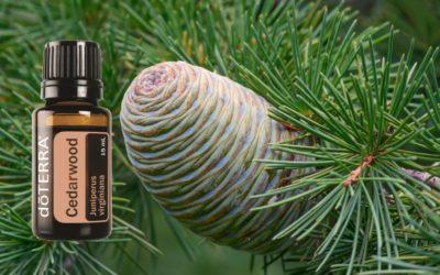 ätherisches Zedern Öl (Cedarwood) von doTERRA