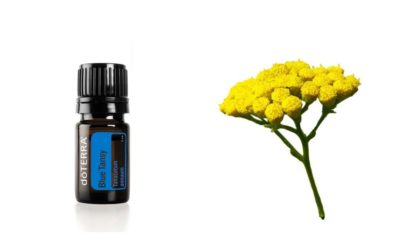 ätherisches Blue Tansy Oel – Blauer Rainfarn