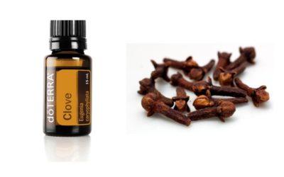 Clove – ätherisches Öl der Gewürznelke