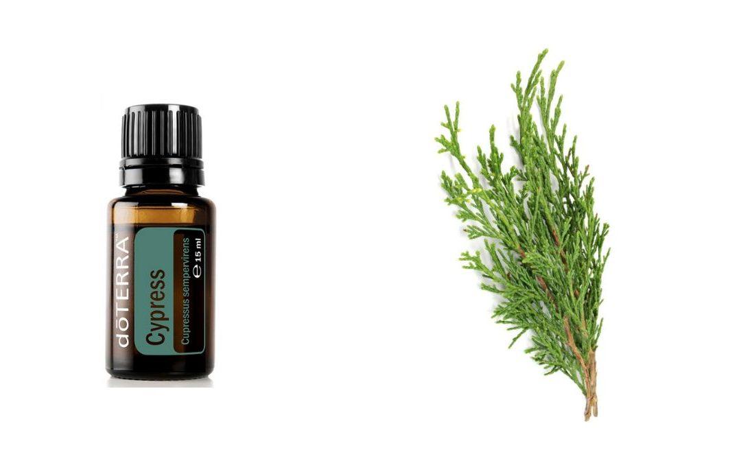 Cypress – ätherische Zypressen Öl