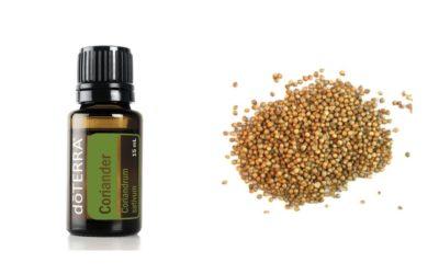 ätherisches Coriander  Öl aus dem  Koriander Samen