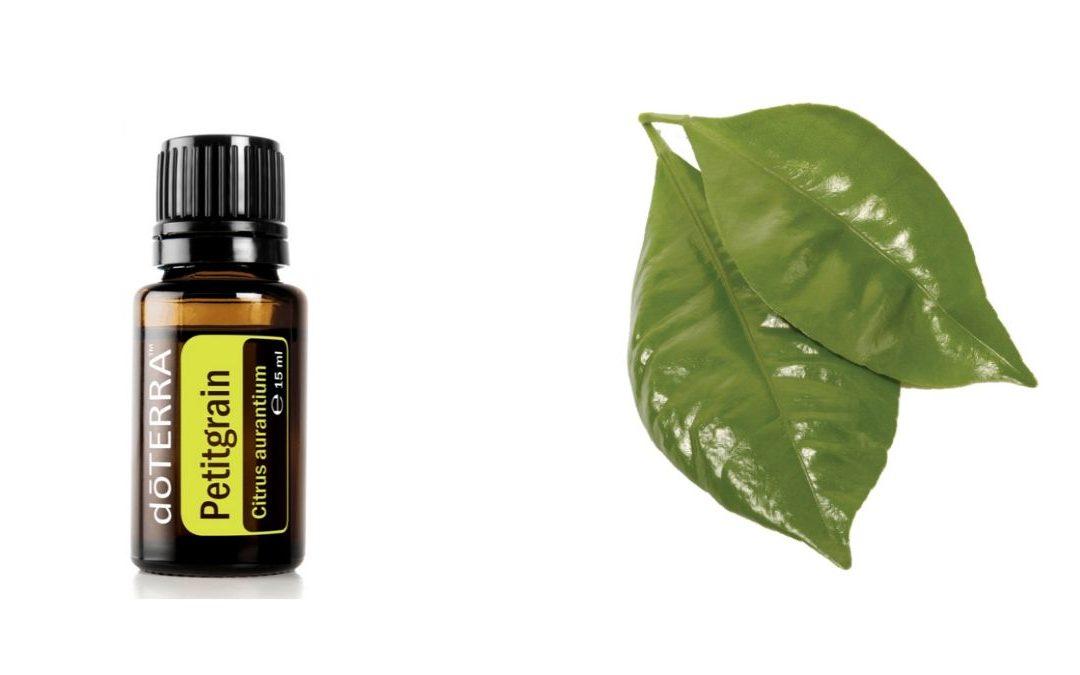 Petitgrain – ätherisches Öl aus dem Baum der Bitterorange