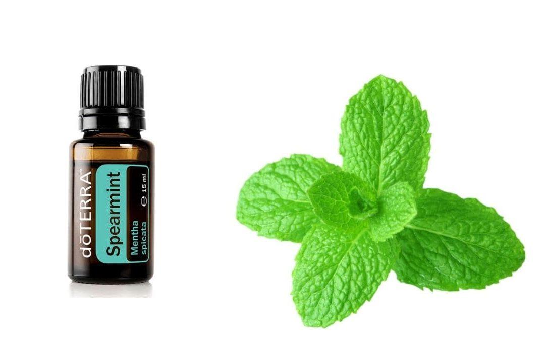 Spearmint – Das ätherische Öl der grünen Minze