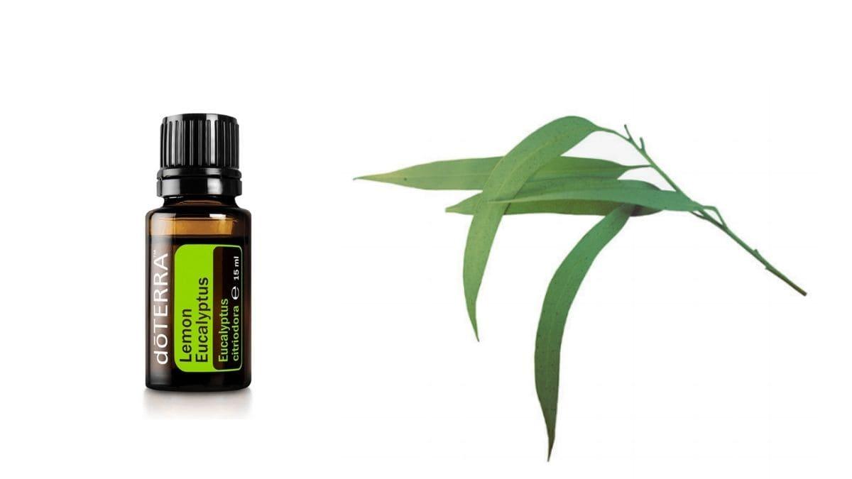 Lemon Eucalyptus Öl von doTERRA in der 15 ml Flasche